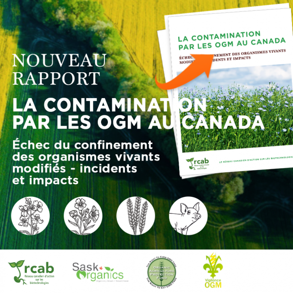 Rapport contamination OGM