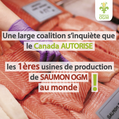 Large coalition inquiète production saumon OGM